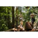 Mere skov forvaltes nu bæredygtigt
