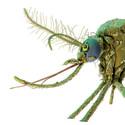 Meteoriter, parasiter och fjärilar