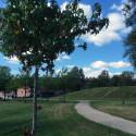 All världens träd i Linehedsparken – invigning av promenadslingor