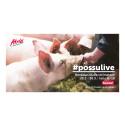Honkalan tilan Possulive tutustuttaa sikojen elämään 26.3.–30.3.