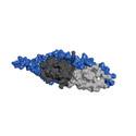 Växelverkan mellan proteiner hjälper Yersiniabakterien orsaka sjukdom