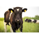 Zaluvida and UC Davis Meat Store announce sale of Climate-Smart beef