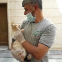 Unter den Tieren, die von Dr. Youssef behandelt werden, stellen Katzen die größte Gruppe dar.