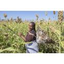 Folkekirkens Nødhjælp inviteret med i globalt klimainitiativ