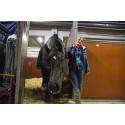Hästen måste få bestämma över sin egen utveckling, säger Paulinda Friberg