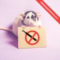 Djurens Rätt uppmärksammar Försöksdjurens dag runt om i landet