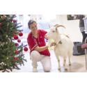 Julens faror för ditt djur
