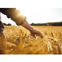 Torka spannmål med fjärrvärme sparar utsläpp i hela landet