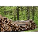 Kinnarps ledande i branschen på att kontrollera sin träråvara