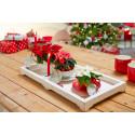 Imponerende juledekorasjoner du enkelt lager selv