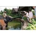 Singapore Zoo efterlyser födelsedagsfirare