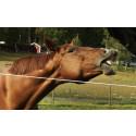 Dina Försäkringar först ut med tandvårdsförsäkring för hund, häst och katt