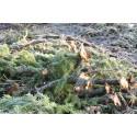 Hållbart skogsbränsleuttag i praktiken – grotexkursion i Uppvidinge