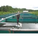 Varmare klimat minskar produktionen av fisk
