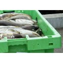 EU-beslut om fiskekvoter för 2015 –  ökat kräftfiske i Skagerrak och Kattegatt