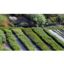 Seminarium: Forskning för gröna näringar