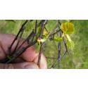 Ny forskning: Våren har blivit både varmare och grönare