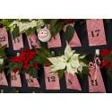 Adventskalender med julstjärnor