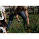 Pressinbjudan: Skolbarn hjälper oss förbereda våren i Stadsparken imorgon