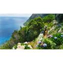 Direktefly til Azorene – eviggrønne øyer i Atlanterhavet