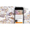 Svenska ungdomar saknar helt arbetslivserfarenhet – idag släpps app-lösningen