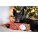 Våra bästa julklappstips till hunden!