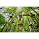 Tyske trætop-events får folk til at gå i skoven
