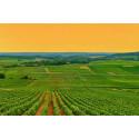 ABC – En inspirerande resa till vinidyllerna Alsace, Bourgogne, Champagne och Chablis!