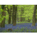 HS2 announces Woodland Fund