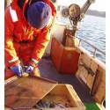 Försämrad fiskhälsa oroar forskare