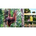 Upplev Borneos Regnskog