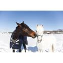 Möt oss på Hästföretagarforum och Eurohorse