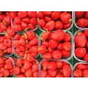 Nå er det snart norske jordbær til alle