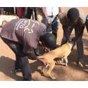 Mittel der Wahl im Kampf gegen die Tollwut: Flächendeckende  Impfungen von Hunden.