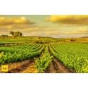Bodegas Torres sai Drinks International -lehden 'Parhaan viinimatkakokemuksen' palkinnon