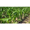 Nyupptäckt mikrobgrupp oskadliggör växthusgas i marken