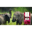 Afrikas elefanter borta om 14 år!