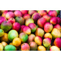 Det visste du (kanske) inte om mango