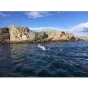 Koster Swimrun gynnar den lokala turismen