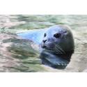 Einladung zur Taufe des Robbenbabys am 28. September