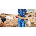Vill du jobba med djur? Här är 5 gymnasieutbildningar för dig!