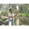 Garantiezins für Lebensversicherungen sinkt erneut - Life Forestry analysiert Folgen für den Vermögensaufbau