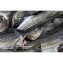 Bredare synsätt ger mer uthålligt fiske