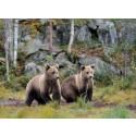 Pressinbjudan – följ med när landshövding Ylva Thörn letar björnspillning