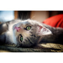 Lyckat initiativ mättar de hemlösa katterna