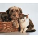 Pas på din hund eller kat i loppesæsonen