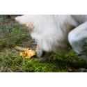 Träna hunden till att bli en duktig svampletare!