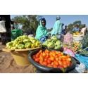 Hunger och extrem fattigdom hindrar hållbar utveckling