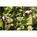 Tre av fyra köper Fairtrade
