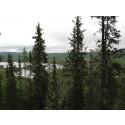 Dalarna har fått tre nya naturreservat på nästan 1 500 ha skogsmark
